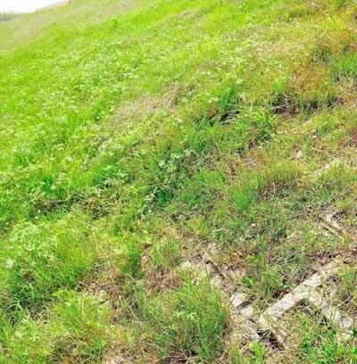 植生砼生态护坡案例