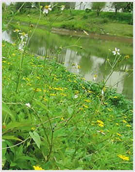植生砼生态护坡系统